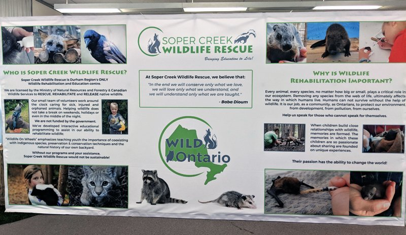 rescue and rehab wall