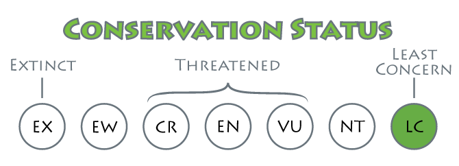 conservation-status-least-concern